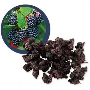 Lifefood Moruše černá sušená BIO RAW 500 g